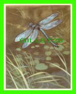 CHROMOS - LA LIBELLULE BLEUE - IMAGE 53 SÉRIE 4 - ANIMAUX DE TOUS PAYS - ARTIS BRUXELLES - DIMENSION 13 X 16 Cm - - Other
