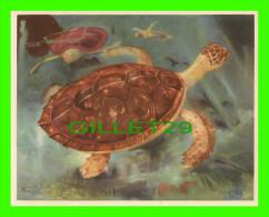 CHROMOS - LA TORTUE ÉCAILLÈRE - IMAGE 42 SÉRIE 3 - ANIMAUX DE TOUS PAYS - ARTIS BRUXELLES - DIMENSION 13X16 Cm - - Other