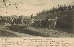 AMERIQUE PEROU AREQUIPA : Llamas Trasportando Carga Marche Des Lamas Au Pied de La Montagne - Timbre poste Oblit�ration