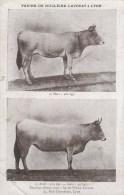 CPSM PUBLICITE ALIMENT ANIMAUX - Farine De Nucléine LAVOCAT Lyon 13 Rue Thomassin - Publicité