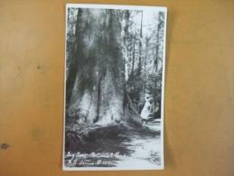 Big Iru National Park A. B. Series Number 339 - Wilderness