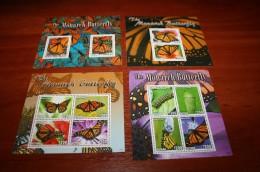 Butterflies 2014 Guyana - Butterflies
