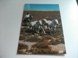 HORSES  CAVALLO  EN CAMARGUE BOUCHES DU RHONE  COW BOY - Horses