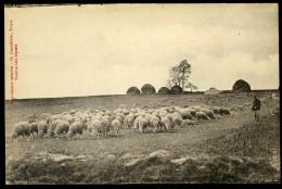 Cpa  Troupeaux De Moutons   AA21 - Elevage