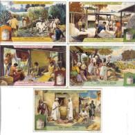 Piante Fibrose E Loro Uso 5 Figurine Cod.liebig.078 - Liebig