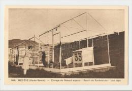 74 Dép.- 966. Megève (Haute-Savoie) - Elevage Du Renard Argenté - Ranch De Rochebrune - Une Cage. L. Morand, Phot.-édit. - Megève