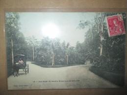 UNE ALLEE  DU JARDIN BOTANIQUE DE SAIGON - Cartes Postales