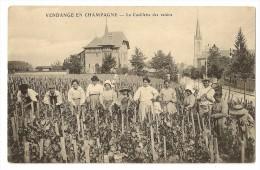 1198 - Vendange En CHAMPAGNE - La Cueillette Des Raisins - Vignes