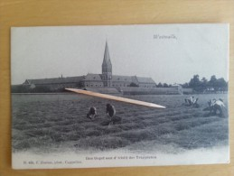 WESTMALLE _ Den Oogst Aan D'Abdij Der Trappisten - Malle