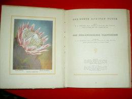 Our South African Flora / Ons Suid-Afrikaanse Plantegroei COMPTON  Plantes Botanique  Fleurs / Afrique Du Sud - Livres, BD, Revues