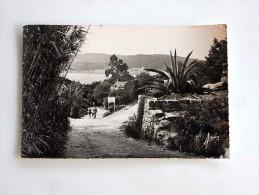 Carte Postale Ancienne : L'ILE DU LEVANT : Descente Vers Le Port, Animé, En 1957 - France