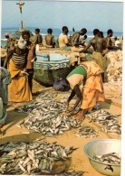 C P M---AFRIQUE---COTE D'IVOIRE---retour De La Pêche à SASSANDRA---voir 2 Scans - Ivory Coast