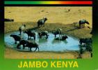KENYA   WILDLIFE  OF  KENYA    BUFFALOES     12X17      (VIAGGIATA) - Kenia