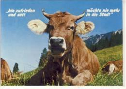 Humor, Umorismo - Jux AK - Cattle, Tierische Gruesse Vom Alpenland,  Kuh - Cows