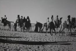 PHOTO GUERRE DALGERIE NOMADES ENTRE AOULEF & REGGANE->SAHARA ALGERIE EX COLONIE FRANCAISE 1961->ORIGINAL PHOtography RRR - War, Military