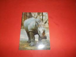 B626 Rinoceronte Bianco No Viaggiata Presenza Alcune Pieghe E Macchie Al Retro - Rinoceronte