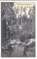 Craveggia, Nella Pineta Della Vasca Il Carico Dei Tronchi Di Pino, Animata - F.p. - Anni 1920 - Verbania