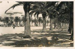 B15782 Bizerte, Avenue De La Marne - Tunisie
