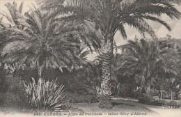 Cannes-  Allée Des Palmiers - Hôtel Gray D' Albion    - Scan Recto-verso
