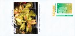 "SPAIN, 2015 Carnivorous Plants (ICPS), Pitcher Plants, Dionaea ""Yellow Orange"""