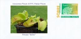 "SPAIN, 2015 Carnivorous Plants (ICPS), Pitcher Plants, Dionaea ""Yellow"""