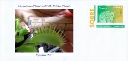 """SPAIN, 2015 Carnivorous Plants (ICPS), Pitcher Plants, Dionaea """"XL"""""""