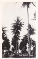 RP: NEW GUINEA , 1940s ; Cocanut Trees - Papua New Guinea