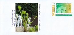 SPAIN, 2015 Carnivorous Plants (ICPS), Pitcher Plants, Dionaea 'WIP Slim Snapper' (B.Hanrahan & S.Doonan)