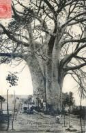 Baobab à Boma Congo - Französisch-Kongo - Sonstige