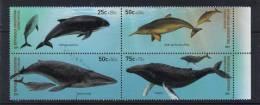 ARGENTINA FAUNA MARINA BALLENA DELFÍN MARSOPA MAMÍFERO MAR - Whales