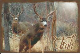 CPM USA Utah, Muley Buck Deer - Cerf Mulet - Forêt - 2 Cervidés - Non Classés