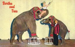 G)1962 USA, ELEPHANTS, BERTHA AND TINA, THE NUGGETS OWN TALENTED PACHYDERMS, POSTAL CARD, UNUSED, XF - Elephants