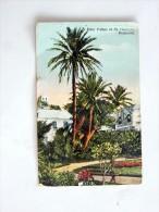 Carte Postale Ancienne : BERMUDA : Date Palms At St GEORGES, Stamp 1938 - Bermudes