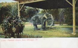 G)1910  USA, ELEPHANT, LINCOLN PARK, CHICAGO, ILL., POSTCARD, UNUSED, XF - Elephants