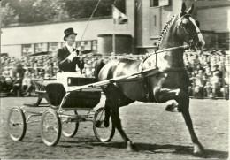 CARTE POSTALE CHEVAL ELEVAGE HOLLANDAIS HOLLANDE ATTELAGE GELDERS  COLLECTION ANIMAUX PUBLICITE MEDECINE - Pferde