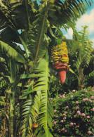 España--Tenerife--1980--Islas Canarias--Flores Y Plataneras- - Flores