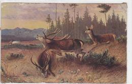 Hunting - Jagd - Caccia