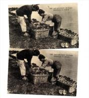 Collection Carte D'autrefois Oleron Emballage Huitre - Autres
