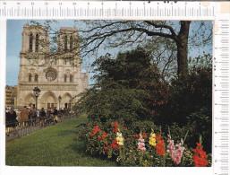 PARIS   -    La  Cathédrale   NOTRE  DAME - Notre Dame De Paris