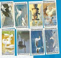 Stollwerk  Vogels - Animaux