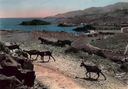 66 - BANYULS  SUR MER - Vue Panoramique -  Plage De Paulilles  - Chèvres - Dos Vierge - CPSM  - 2 Scans - Banyuls Sur Mer