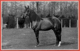 CPA CARTE PHOTO V. Geirland LEDEBERG (empreinte à Sec) Gent Gand Belgie Belgique Belgium Cheval Horse Hippisme - Gent
