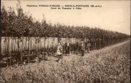 49 - DOUE-LA-FONTAINE - Pépinières PINEAU-PARAGE - Pommiers à Cidre - Photo Godichaux - Doue La Fontaine