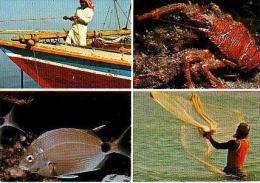 Divers     H1     Fishing - Arabie Saoudite