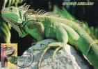 D21004 CARTE MAXIMUM CARD FD 2013 NETHERLANDS - IGUANA BURGERS ZOO CP ORIGINAL - Reptiles & Amphibians