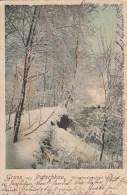 AK Gruss Aus Patschkau-Winterlandschaft Im Wäldchen - Karte. Gel 1907 - Schlesien