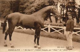 61 Pin Aux Haras. Haras Du Pin. Bel Ami II , Trotteur Français - France
