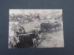 Northern Thailand Scenes From The Past (troupeaux De Boeuf  Et Charette ) - Tailandia