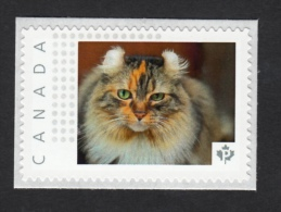 AMERICAN CURL DOMESTIC CAT  Breed Picture Postage MNH Canada 2015 [p15/8dct4/3] - Domestic Cats