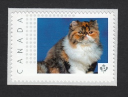 PERSIAN  DOMESTIC CAT  Breed Picture Postage MNH Canada 2015 [p15/8dct4/1] - Domestic Cats